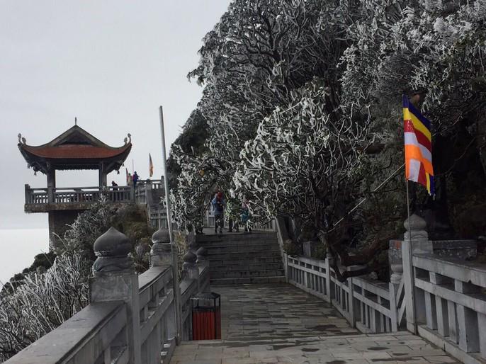 Hiếm hoi cảnh đỗ quyên rực lửa trong tuyết trên đỉnh Fansipan - Ảnh 13.