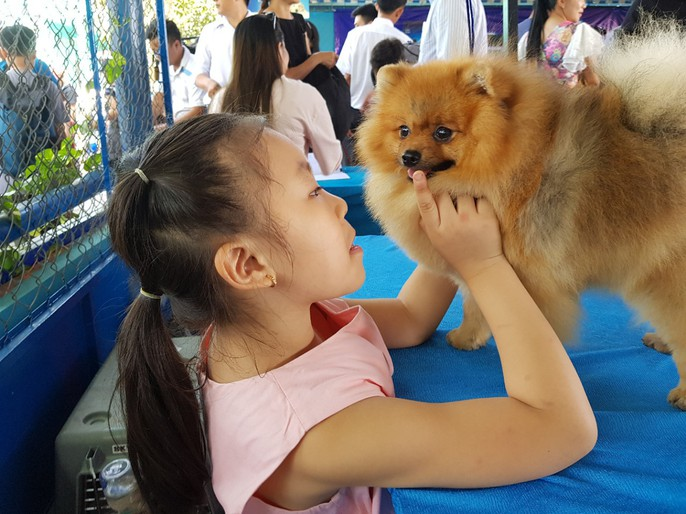 Ngắm dàn chó đắt tiền từ khắp nơi về miền Tây thi chó đẹp - Ảnh 8.
