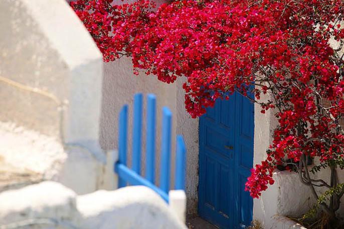 Chết lịm trước những ngôi nhà cổng hoa giấy đẹp tuyệt - Ảnh 14.