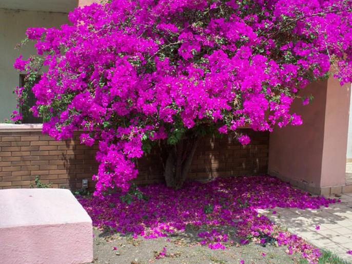 Chết lịm trước những ngôi nhà cổng hoa giấy đẹp tuyệt - Ảnh 15.