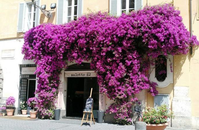 Chết lịm trước những ngôi nhà cổng hoa giấy đẹp tuyệt - Ảnh 16.