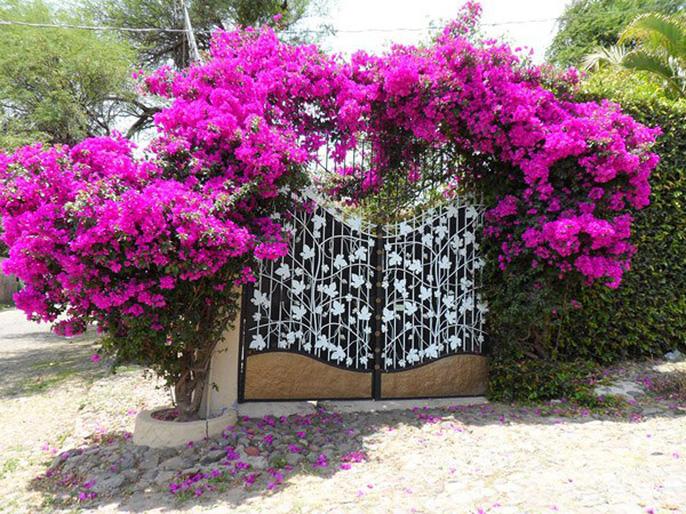 Chết lịm trước những ngôi nhà cổng hoa giấy đẹp tuyệt - Ảnh 17.