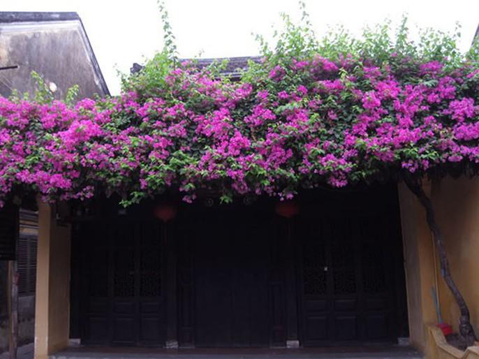 Chết lịm trước những ngôi nhà cổng hoa giấy đẹp tuyệt - Ảnh 2.