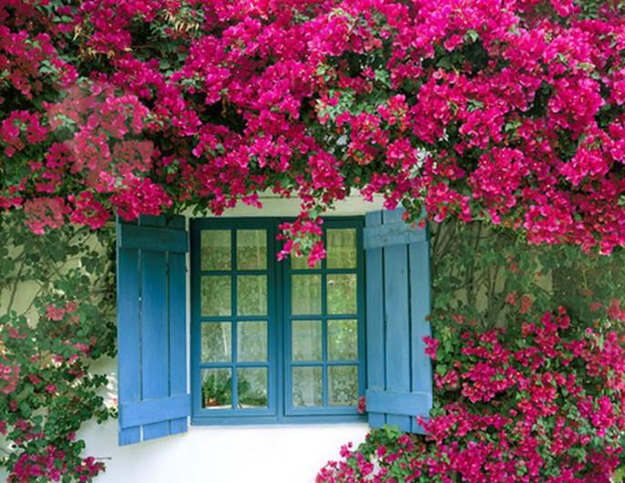 Chết lịm trước những ngôi nhà cổng hoa giấy đẹp tuyệt - Ảnh 3.