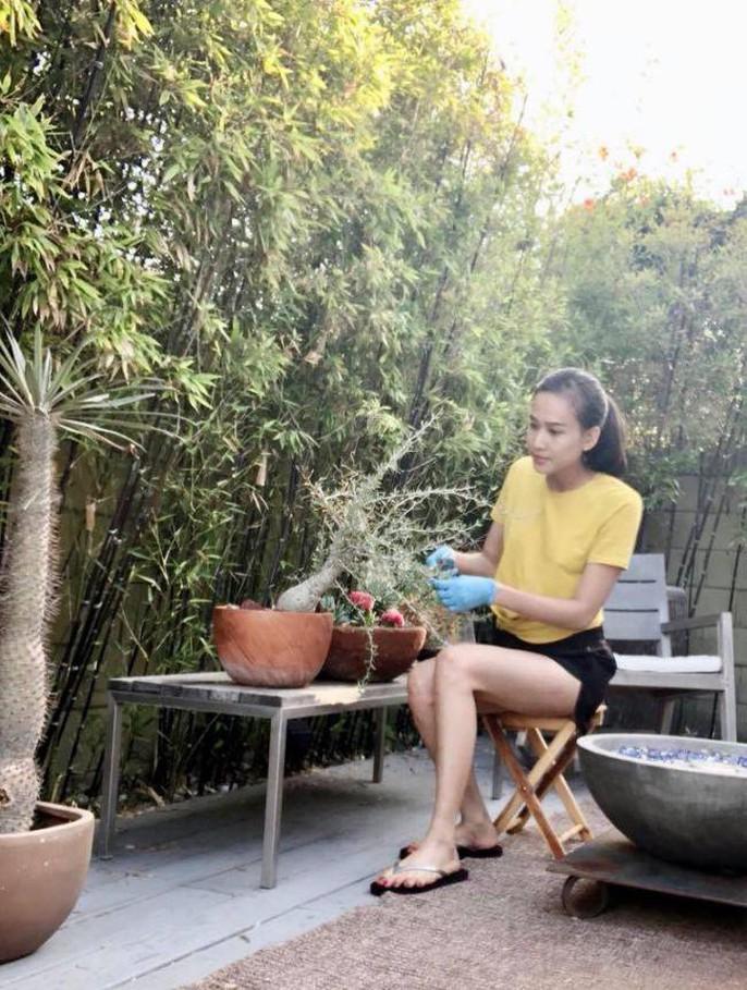 Hoa hậu Dương Mỹ Linh khoe vườn hoa hồng và cây ăn quả ở Mỹ - Ảnh 10.