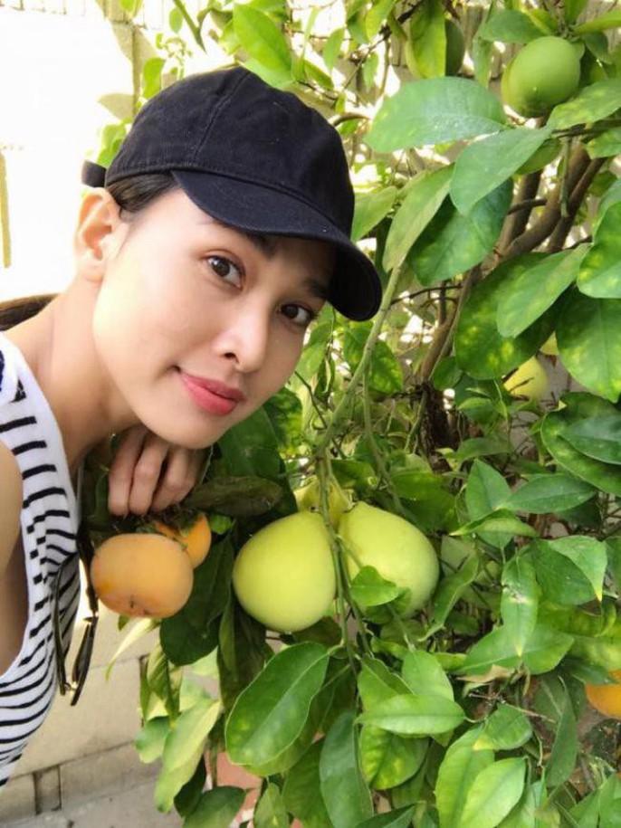 Hoa hậu Dương Mỹ Linh khoe vườn hoa hồng và cây ăn quả ở Mỹ - Ảnh 4.