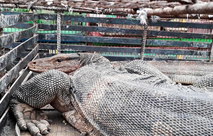 Cận cảnh tàn sát chim trời ở chợ chim lớn nhất Miền Tây - Ảnh 10.