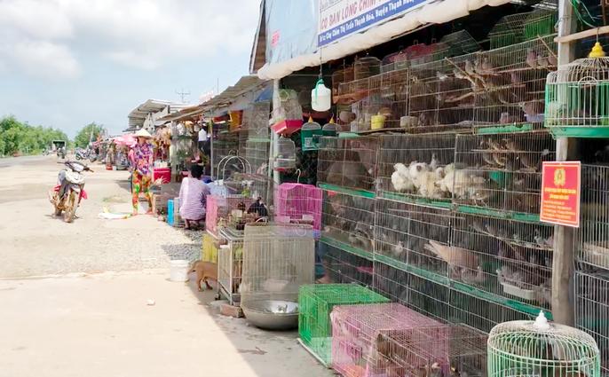 Cận cảnh tàn sát chim trời ở chợ chim lớn nhất Miền Tây - Ảnh 3.