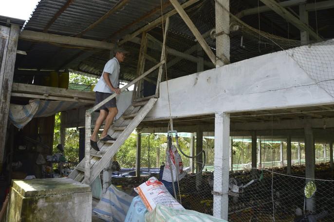 """Chuồng 2 tầng nuôi gà nòi lai giúp 1 nông dân """"hốt bạc"""" - Ảnh 3."""