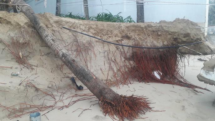 Cận cảnh bờ biển quyến rũ nhất hành tinh bị sạt lở nghiêm trọng - Ảnh 7.