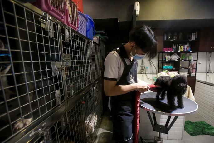 Choáng ngôi nhà 5 sao của thú cưng Sài Gòn - Ảnh 18.