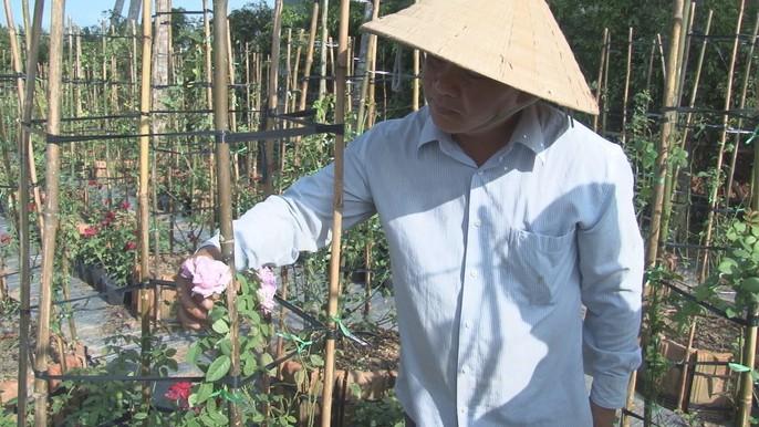 Du Xuân ngắm vườn hoa hồng lớn nhất miền Tây - Ảnh 2.