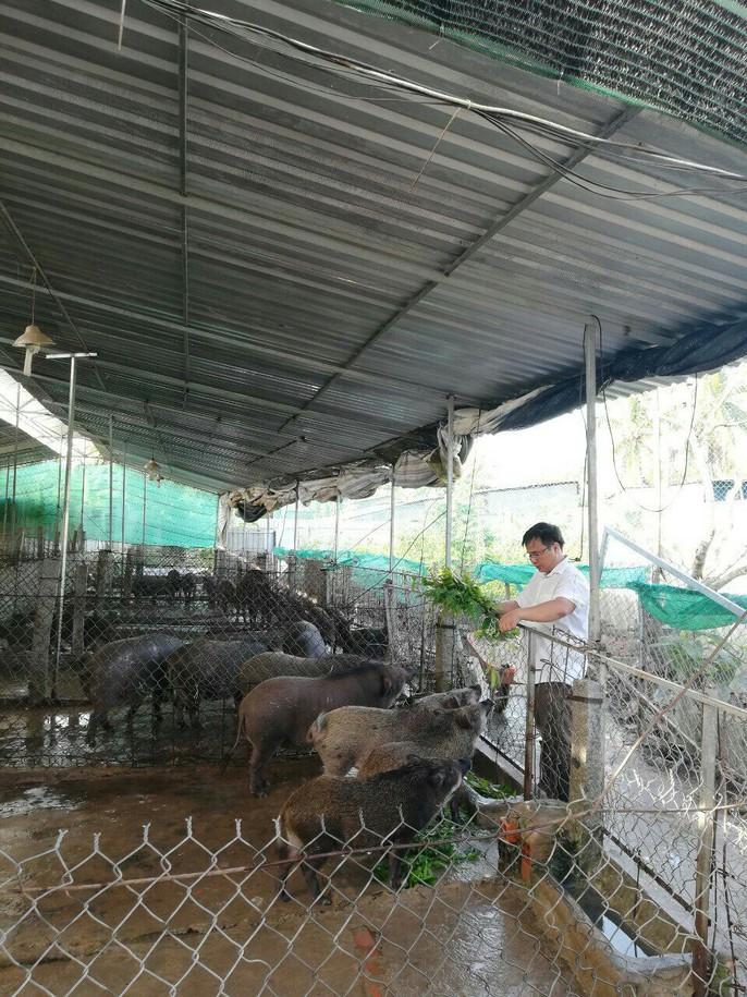 9X mở trang trại nuôi heo rừng, bỏ túi nửa tỉ/tháng - Ảnh 1.