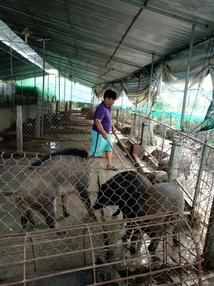 9X mở trang trại nuôi heo rừng, bỏ túi nửa tỉ/tháng - Ảnh 6.