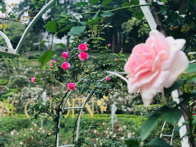 Sững sờ trước vườn hồng 3,5 ha tuyệt đẹp vừa nhận kỷ lục Việt Nam - Ảnh 1.