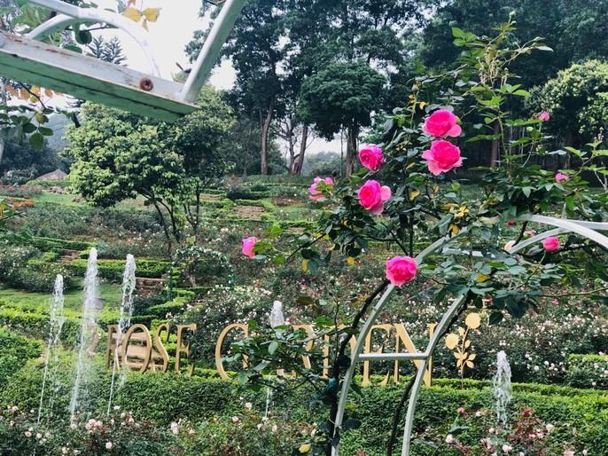 Sững sờ trước vườn hồng 3,5 ha tuyệt đẹp vừa nhận kỷ lục Việt Nam - Ảnh 6.