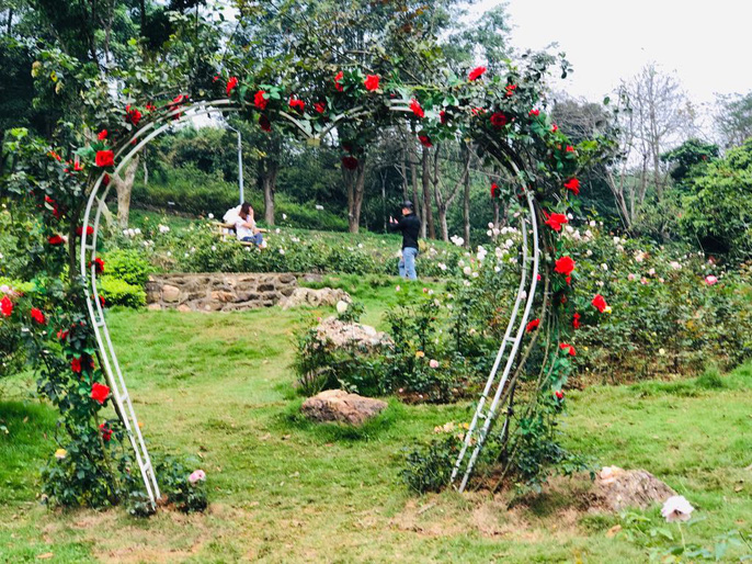 Sững sờ trước vườn hồng 3,5 ha tuyệt đẹp vừa nhận kỷ lục Việt Nam - Ảnh 15.