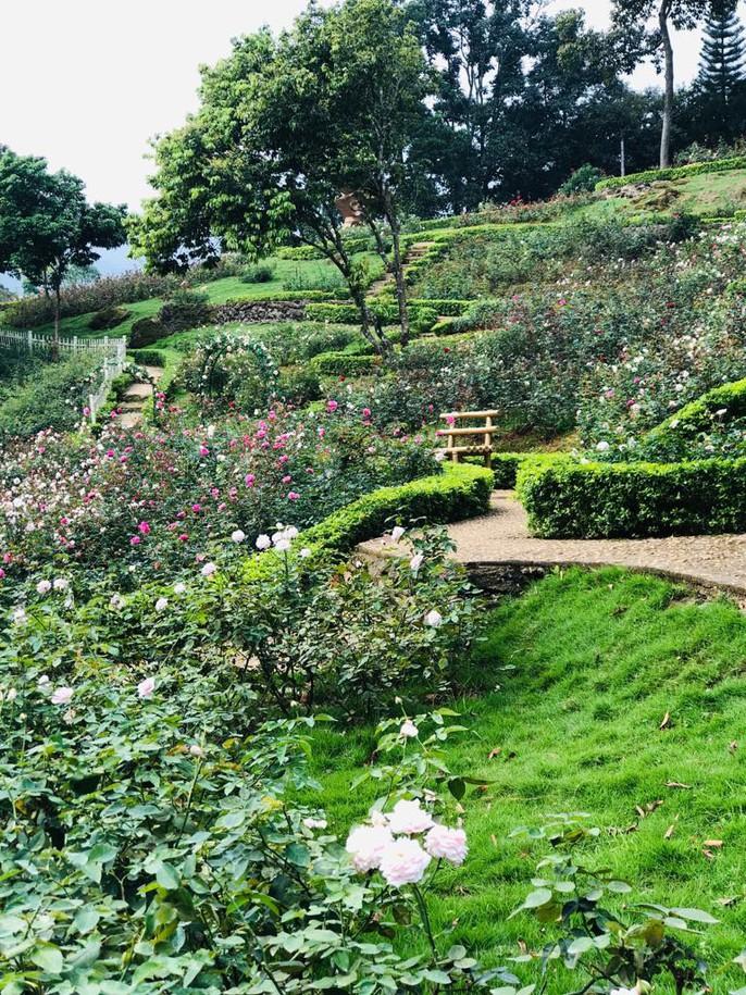 Sững sờ trước vườn hồng 3,5 ha tuyệt đẹp vừa nhận kỷ lục Việt Nam - Ảnh 14.