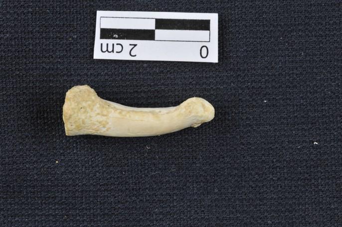 Phát hiện loài người hoàn toàn mới ở Philippines - Ảnh 2.