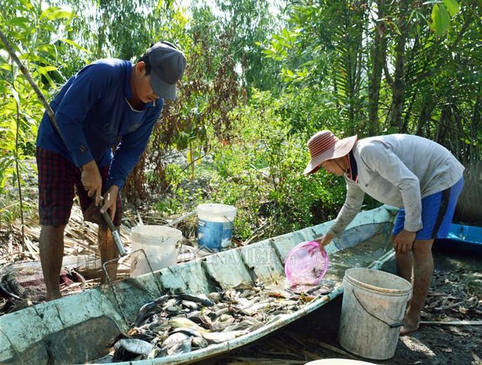Ngợp với cảnh mỏi tay vớt cá dạt vào bờ ở Cà Mau, Bạc Liêu - Ảnh 11.