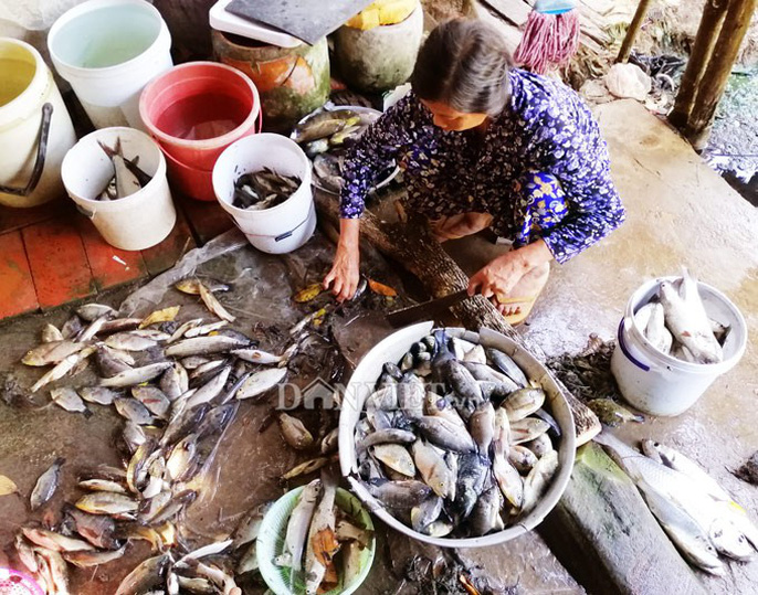 Ngợp với cảnh mỏi tay vớt cá dạt vào bờ ở Cà Mau, Bạc Liêu - Ảnh 14.