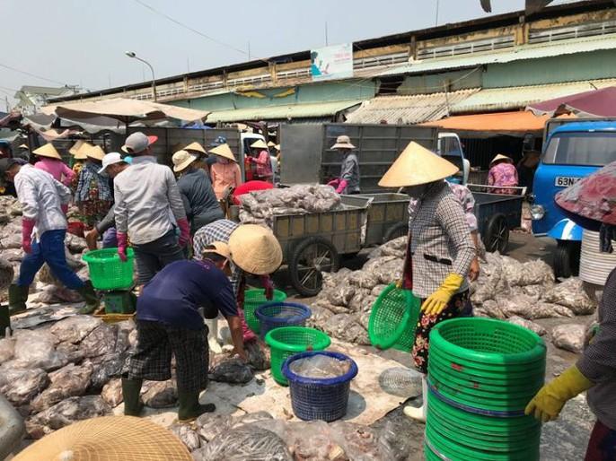 Bạch tuộc ắp ụ ở Vàm Láng, Gò Công Đông - Ảnh 1.