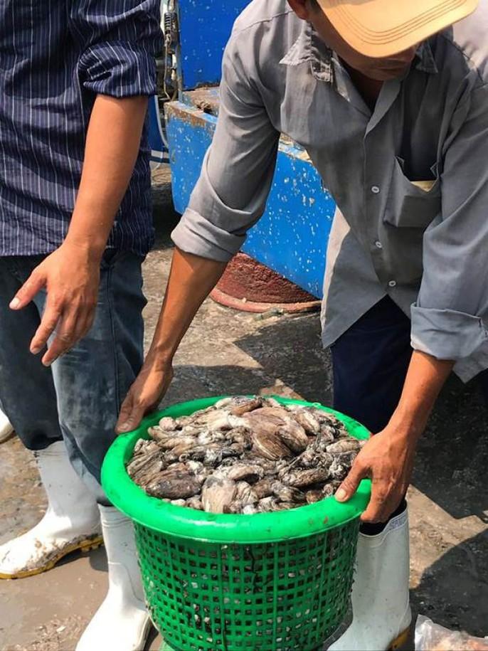 Bạch tuộc ắp ụ ở Vàm Láng, Gò Công Đông - Ảnh 7.
