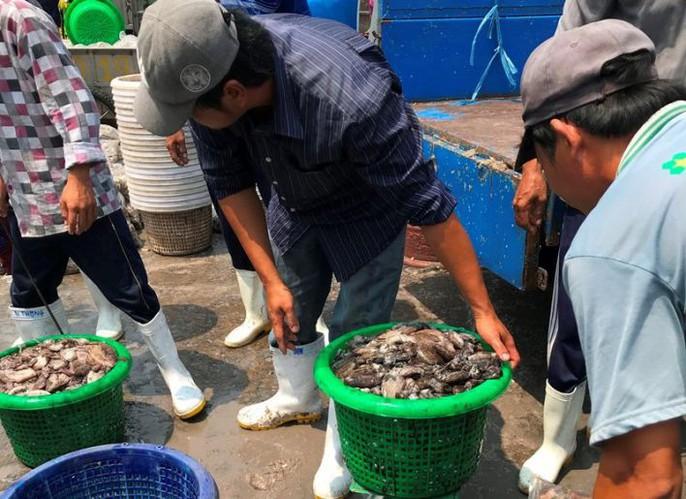Bạch tuộc ắp ụ ở Vàm Láng, Gò Công Đông - Ảnh 2.