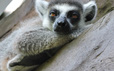 """Clip: Những khoảnh khắc """"cưng muốn xỉu"""" ở  vườn thú Safari Phú Quốc"""