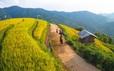 Mùa vàng Bắc Yên