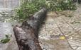 TP HCM: Một công nhân quản 1.000 cây xanh