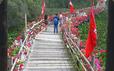 """Thỏa sức """"check in"""" chiếc cầu tre dài nhất Việt Nam giữa rừng tràm"""