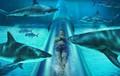 Trượt máng xuyên bể cá mập tại công viên nước lớn nhất Dubai