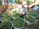 Trái cây mùa nóng sốt giá, hút hàng
