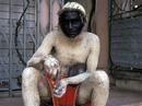 """Ấn Độ: Đàn khỉ """"chiếm"""" tòa nhà Quốc hội"""