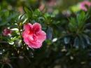 Ngắm loài hoa minh chứng cho tình yêu vĩnh hằng