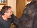"""Khỉ """"khóc"""" khi nghe tin Robin Williams qua đời"""