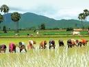 Học cách tiếp thị gạo từ Campuchia