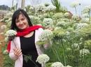 Mùa xuân đi Đà Lạt, đã mắt với ngàn hoa