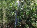 Vợ bỏ đi, chồng treo cổ trên cây dừa tự tử