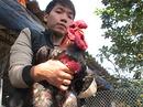 Loạn gà Đông Tảo