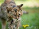 Mèo sống lâu nhất chết ở tuổi 24