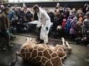 Sở thú xả thịt hươu con bị đe dọa