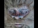 Bằng chứng mới về quái thú Bigfoot