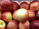 Dừng nhập khẩu 38 loại hoa quả từ Australia