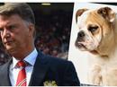 Rojo ví khuôn mặt Van Gaal như... chó bull