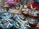 Đà Nẵng thí điểm đấu giá hải sản ở chợ đầu mối