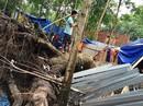 Nhiều địa phương thiệt hại do mưa lũ