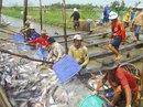 Kinh tế Việt Nam tiếp tục phục hồi