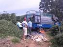 Bà Hà Linh mất, dân trồng trà khốn đốn